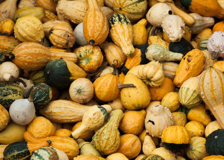 photo of Autumn squash
