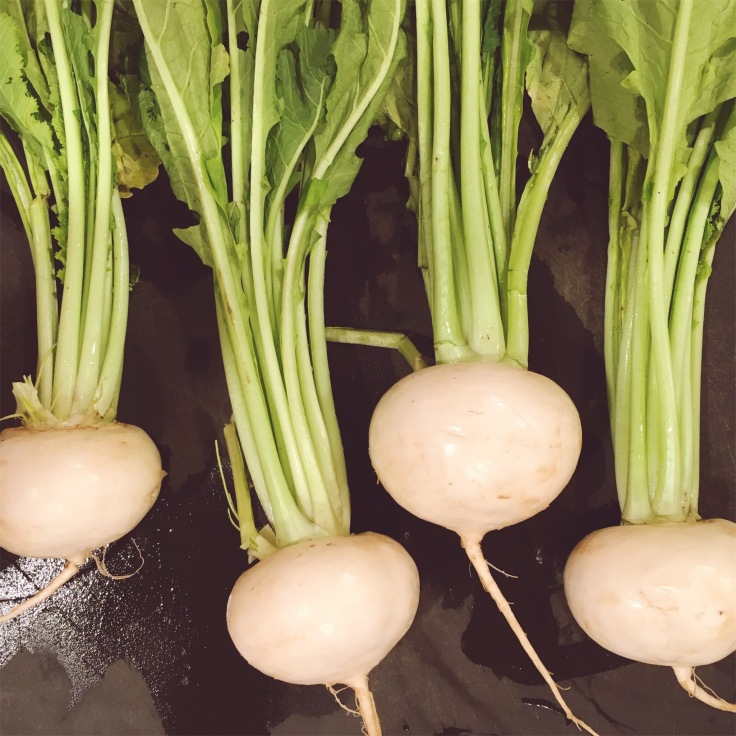 Photo of young white turnips